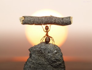 ant-lifting-log-300x228